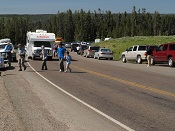 Traffic jam in Yellowstone National Park